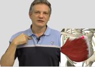 Selbsttherapie Schulter Videokurs einfachgemacht
